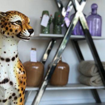 Sfeer cheetah 1 1