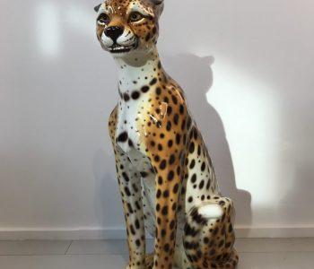 Cheetah beeld 1